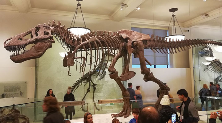 Cosa vedere a New York Museo di Storia Naturale